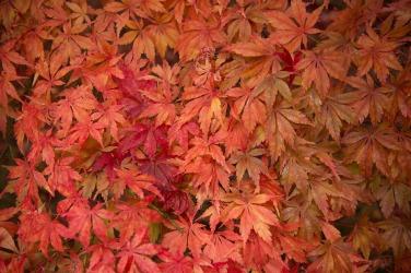 autumn-1507954_1920