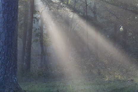 sun-light-1093616_1920