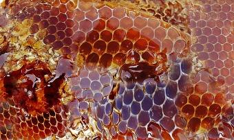 honey-948452_1920
