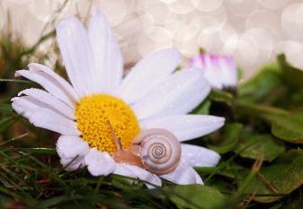 snail-582203_1280